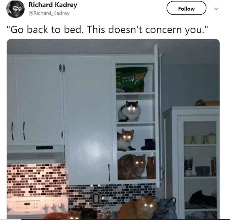 two cats behind a curtain