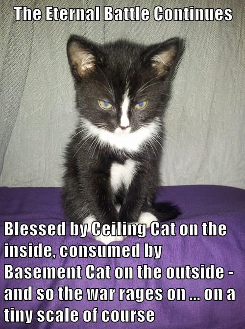 basement cat,struggle,kitten,ceiling cat,Cats,squee