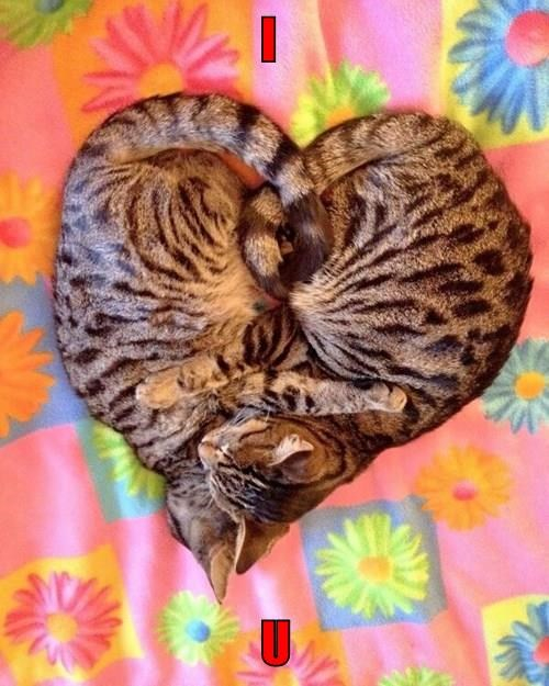 two cats,love,caption