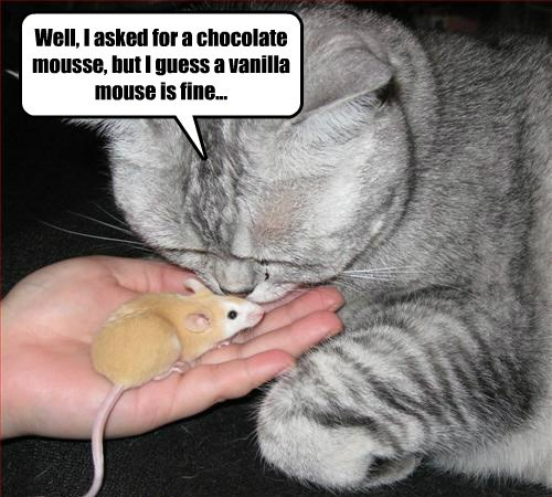 whatever dessert noms Cats mousse mouse