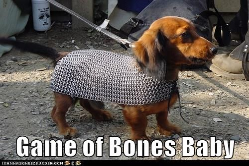 animals costume dogs Game of Thrones dachshund armor - 8475133952
