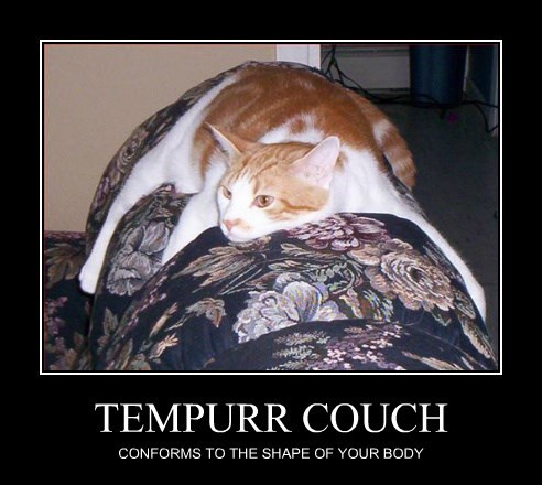 nap couch Cats - 8475174656