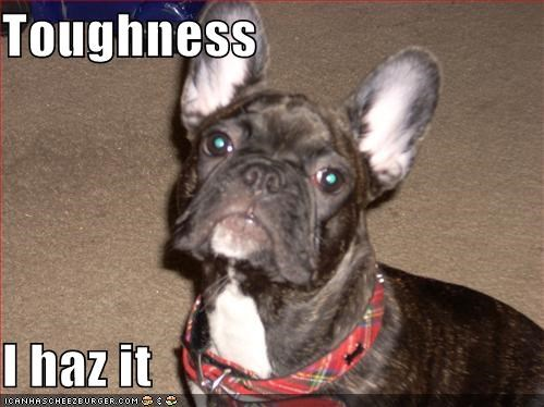 Toughness  I haz it