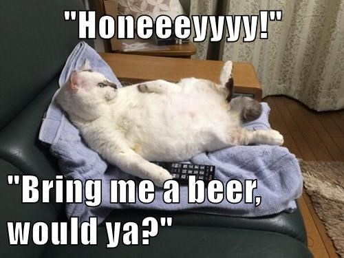 animals beer cat bring caption - 8475276544