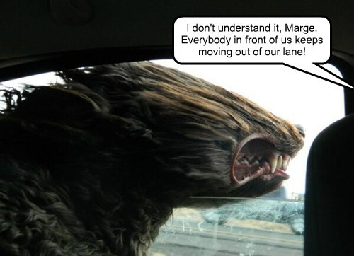 scary,dogs,teeth,driving