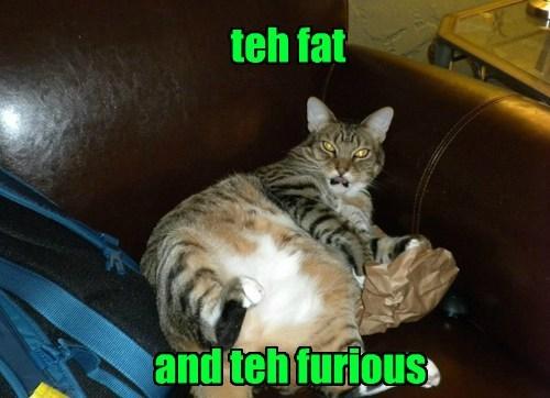 go away cat movies puns grumpy - 8475559168