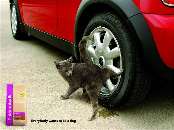 advertising funny cats Cats - 8475653