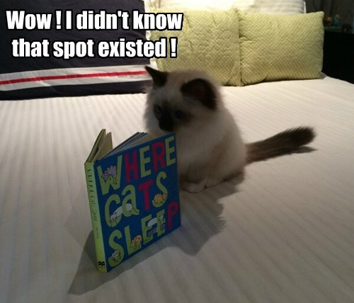 nap reading kitten books Cats siamese - 8475678208