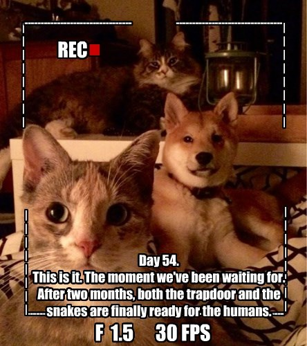 dogs evil plans The End Cats diary - 8475690496