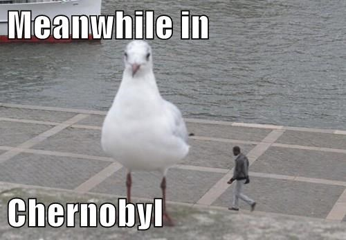 mutant,birds,chernobyl,giant,Meanwhile,seagull
