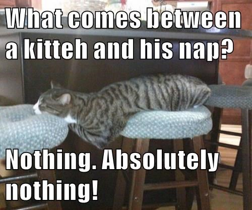 animals nap caption Cats - 8475740672