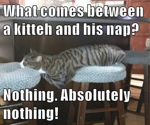 animals nap caption Cats - 8475740672