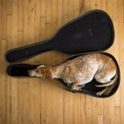 dog sleeps in guitar case cute dog pictures