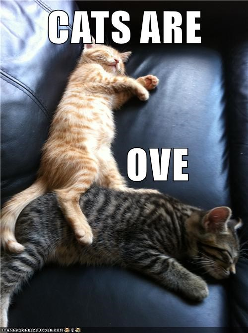 captioned,love,Cats