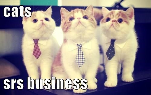 cats  srs business