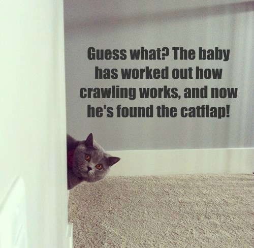 baby crawling Cats funny - 8475878656