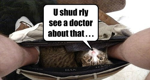 pants Cats funny - 8476308224