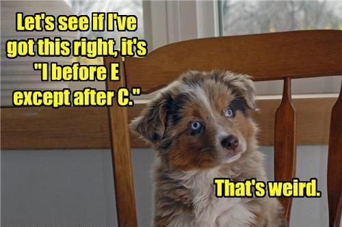 Cheezburger Image 8476310272