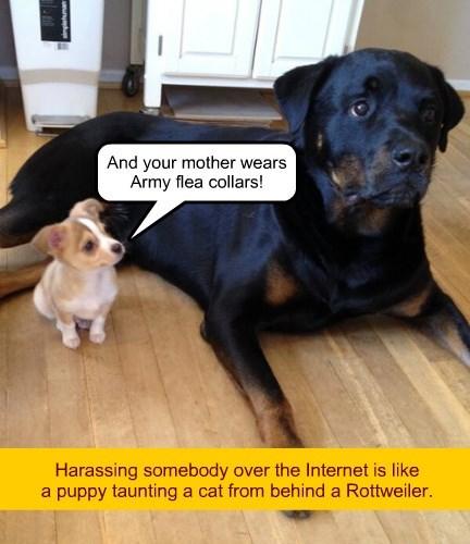 dogs bully the internets puppy true story trolls - 8476365568