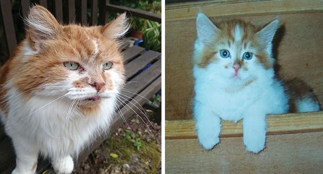 World's Oldest Cat Alive
