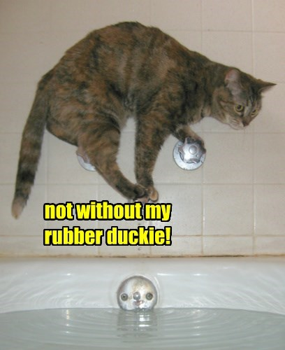 nope,ducky,bath,Cats