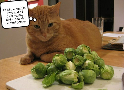 tabby,healthy,noms,brussel sprouts,Cats
