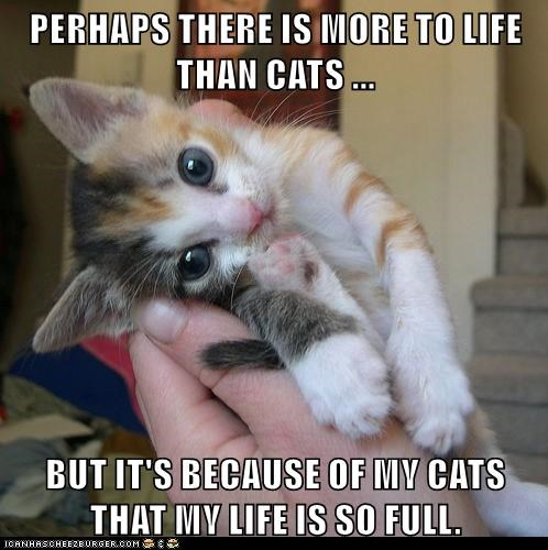 life,kitten,love,Cats