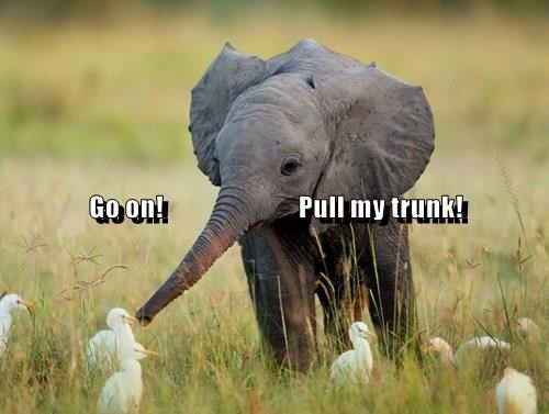 animals elephant captions funny - 8477304064