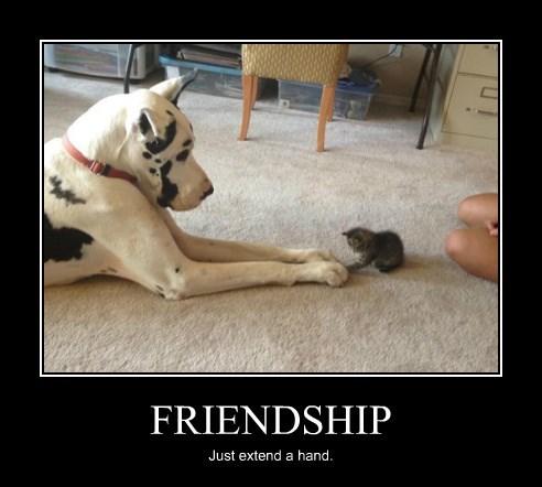 friendship dogs kitten - 8477406208