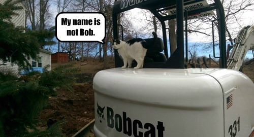 My name is not Bob.