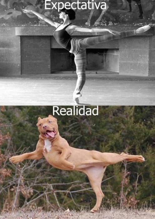 expectativa bailarina