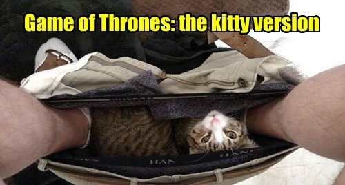 Game of Thrones throne if i fits i sits cats are weird Cats - 8477485568