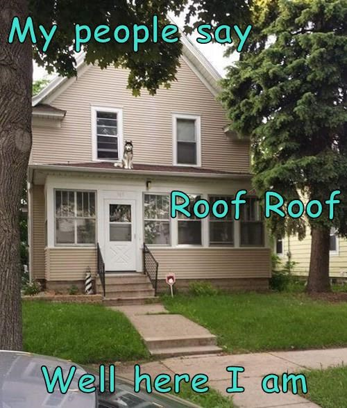My people say Roof Roof Well here I am