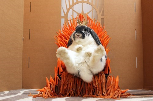 game of thrones bunny funny animal pictures