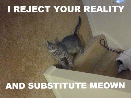 cat offers new reality funny cat pictures
