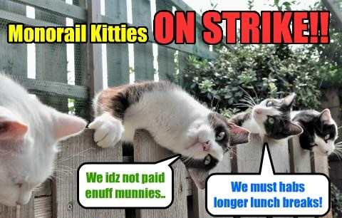 on strike monorail cat Cats funny - 8477670656