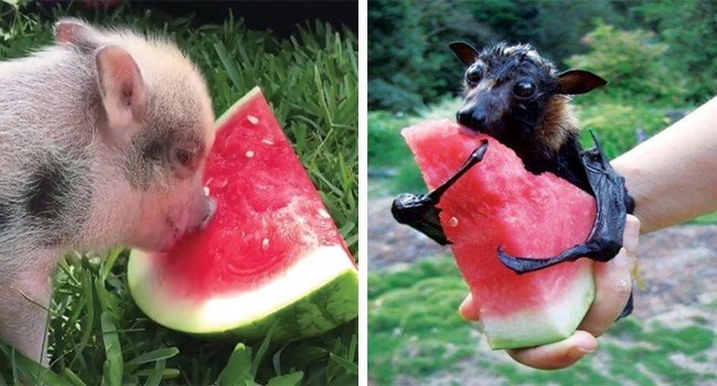 cute animals, animal pics, funny animals, animals in summer,