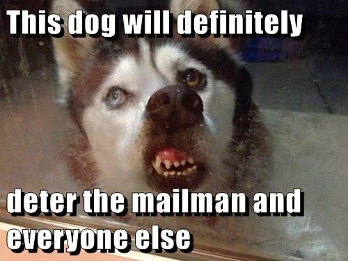 animals dogs wtf husky mailman weird - 8477730560