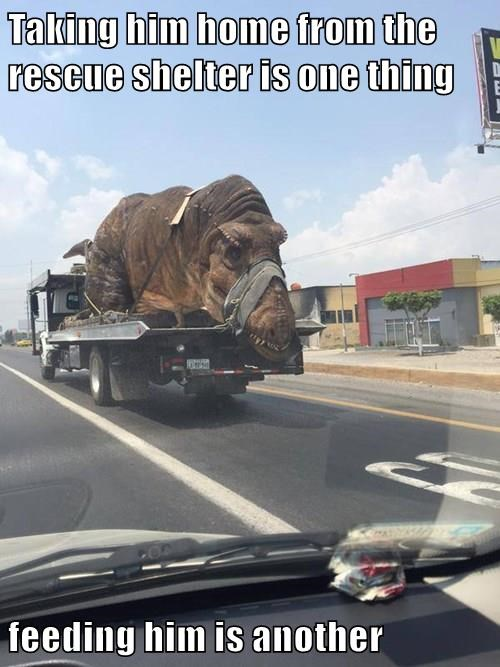 animals captions funny dinosaurs