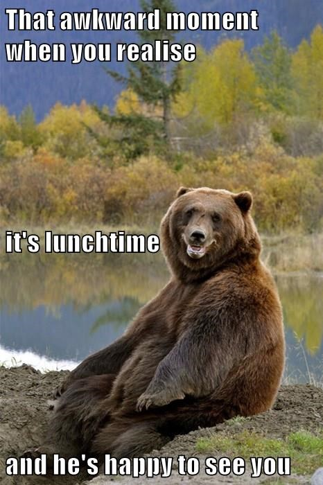 animals bears captions funny - 8477799936