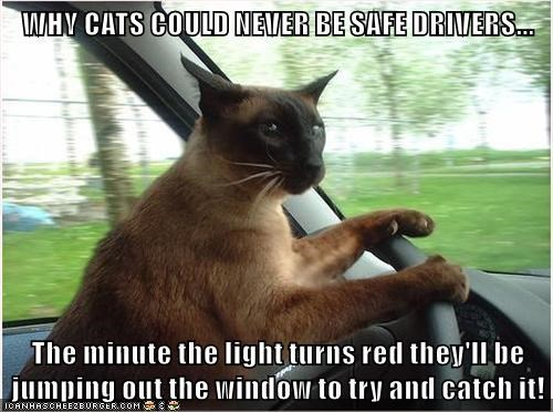animals red dot driver Cats - 8477872640