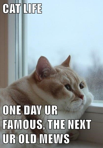 Sad,forgotten,life,internet famous,Cats
