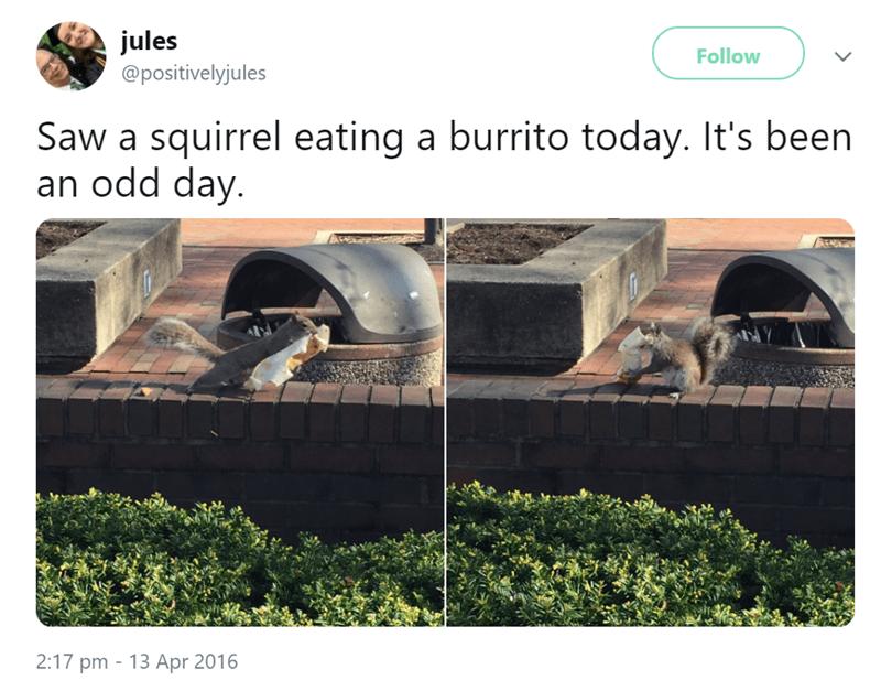 Squirrel eating a borrito