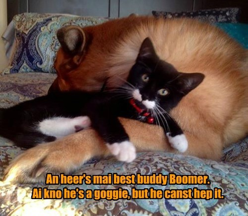 dogs,BFFs,kitten,Cats,squee