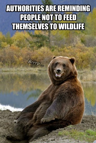 bears captions funny - 8478125568