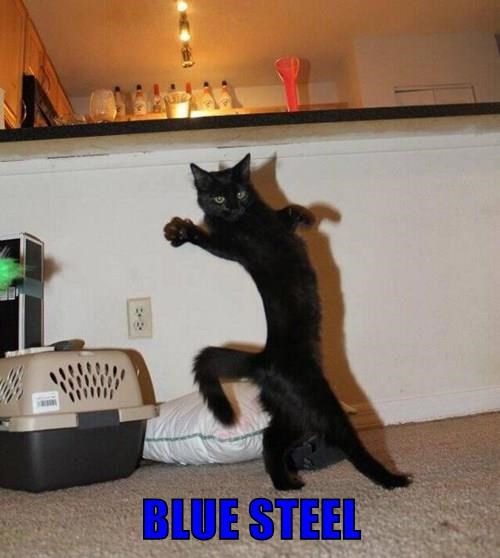 animals blue steel zoolander Cats beautiful black cat - 8478140416