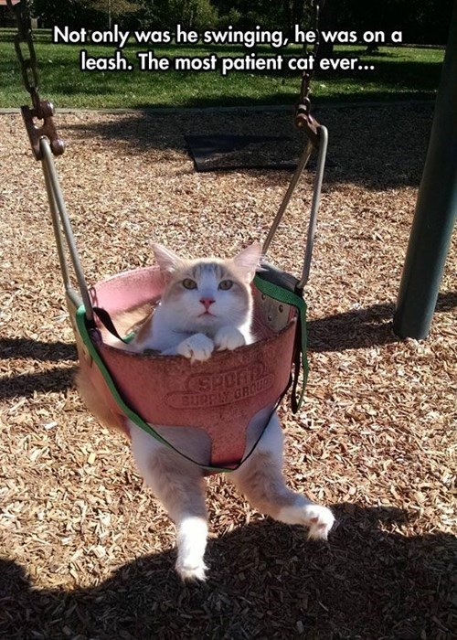 cat on a swing funny cat pictures