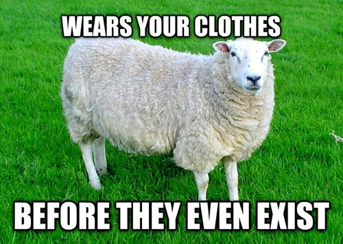 funny-memes-hipster-sheep
