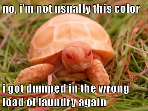 captions,tortoise,funny