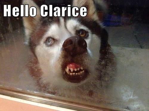 Hello Clarice